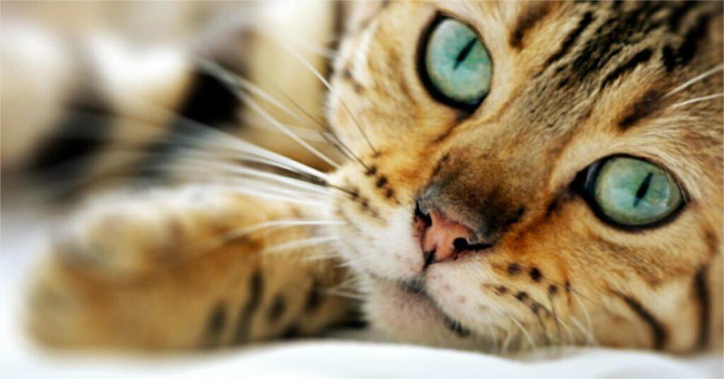 Międzynarodowy dzięń kota